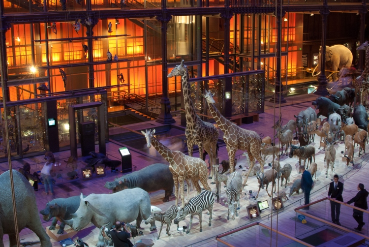 La Grande Galerie de l'Evolution, a great museum in Paris to visit with toddlers