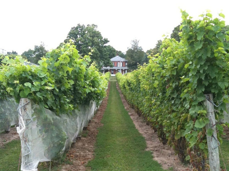Waupoos Estates Winery, one of the Prince Edward County wineries with on-site accommodations