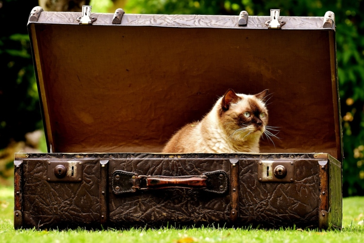 A cat in a suitcase who looks upset because his owners are packing for Paris