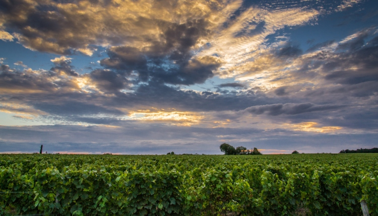The vineyards of Vouvray