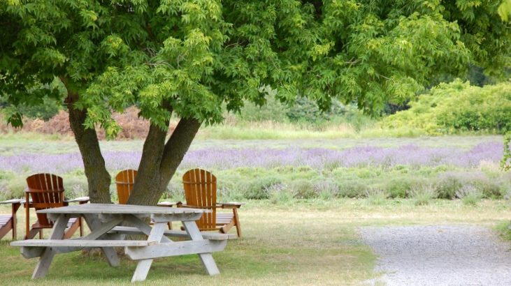 The Prince Edward County Lavender Farm, which is one of the best places to visit in summertime