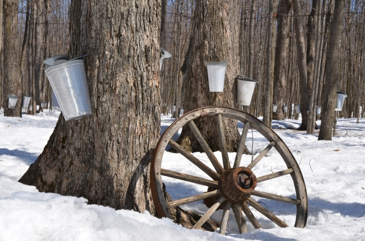 Maple syrup farms, a great place to visit at the end of winter in Ontario