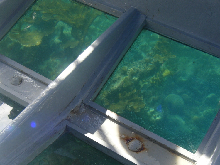 Looking through the glass bottom boat