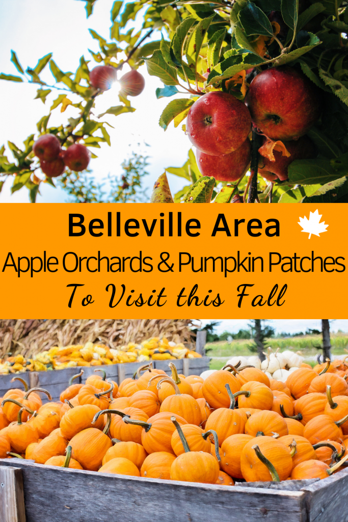Belleville Apple Orchards & Pumpkin Patches Pin