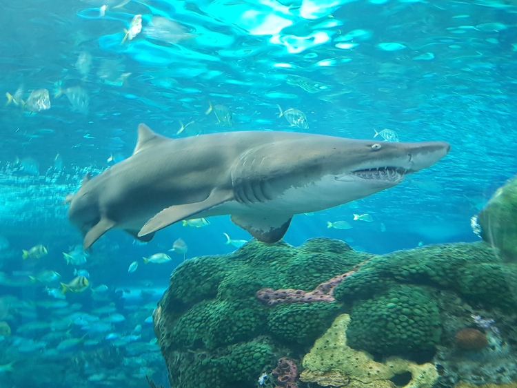 Things to Do in Toronto on Christmas Day - Visit Ripley's Aquarium of Canada