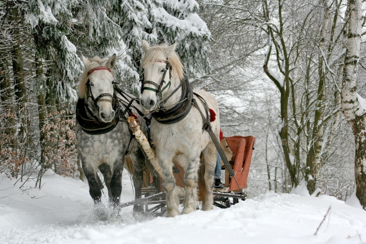 Sleigh rides in Ontario during the winter