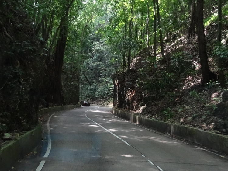 Fern Gully Scenic Drive, one of the lesser known things to do in Ocho Rios