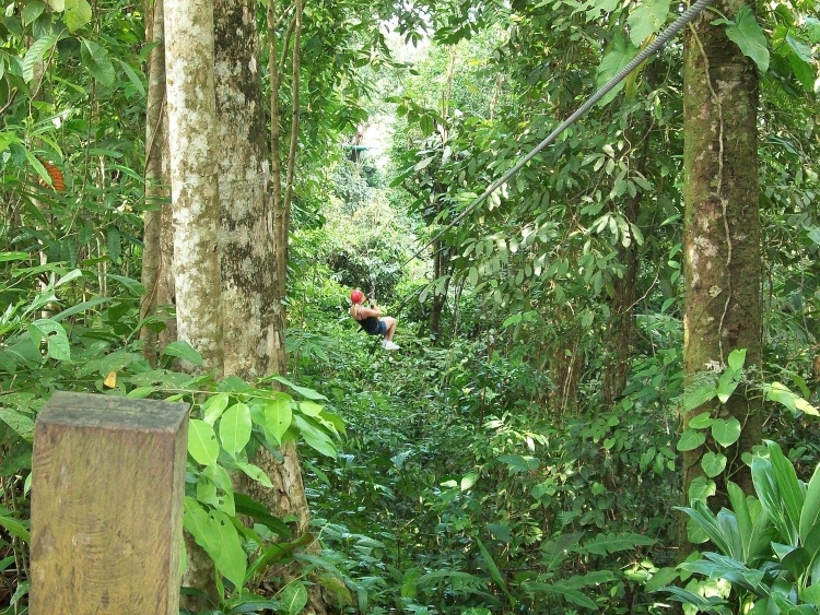 Ziplining, which is one of the popular things to do for adventure seekers in Ocho Rios