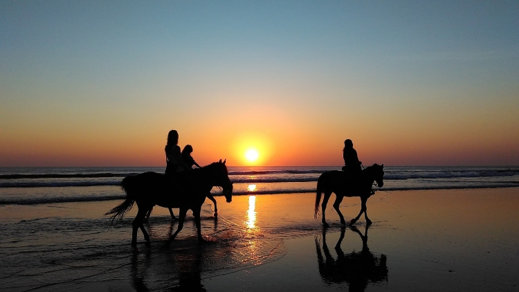 Beach Horseback Ride - Things to do in St. Lucia